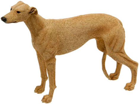 Greyhound Brown or tan