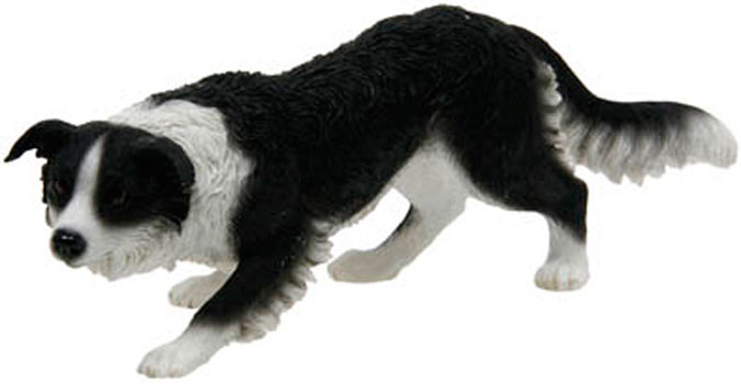 Border Collie Crawling