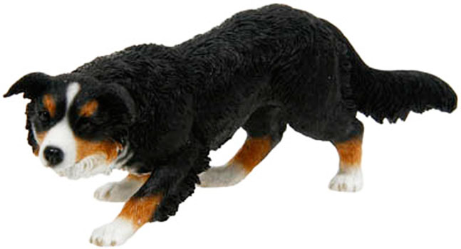 Border Collie Crawling Tri Colour