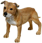 Staffordshire Terrier Tan