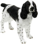 Spinger Spaniel Black