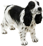 Cocker Spaniel Black