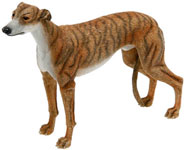 Greyhound Brindle